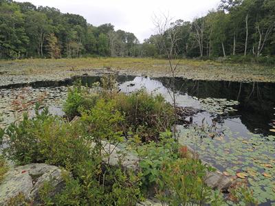 Freshwater Pond